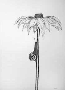 snail - snail A5