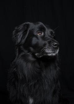 Dexter fotograferad i studion