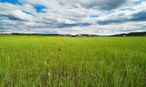 Vasikkavuoma wetlands (© Norrbottens museum)