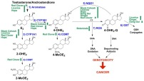 Modulation of Estrogen Chemical Carcinogenesis by Botanical Supplements used for Postmenopausal Women's Health.