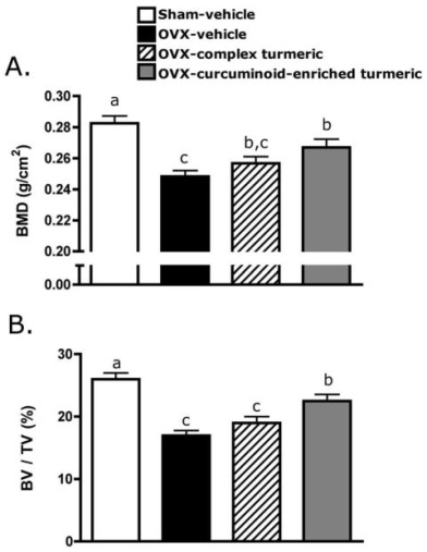 Protection of Trabecular Bone in Ovariectomized Rats by Turmeric (Curcuma longa L.) is Dependent on Extract Composition.  Effect of two months of curcuminoid-containing turmeric extracts on bone mineral density (BMD) and bone volume fraction (BV/TV) was assessed by dual-energy x-ray absorptiometry (DXA), and micro-computerized tomography (μCT), respectively. Three-month old female Sprague Dawley rats (n = 9–11 animals/group) were ovariectomized (OVX) and treated ip for two months with vehicle, a complex turmeric fraction (41% curcuminoids by weight), or a curcuminoid-enriched extract of turmeric (94% curcuminoids by weight). Both extract doses were normalized to curcuminoid content (60 mg/kg, three times per week). Statistical significance was determined by ANOVA with Student-Newman-Keuls post hoc test. Values that do not share the same superscript are significantly different at p < 0.05 for the respective timepoint. (A) After two months of treatment (d 56), BMD was significantly decreased in OVX-vehicle treated animals relative to sham-vehicle. Complex turmeric treatment had no effect on BMD relative to OVX-vehicle treated animals, however, treatment with curcuminoid-enriched turmeric extract significantly protected BMD, preventing 50% loss. (B) Effects of treatment on BMD were confirmed by μCT, a more sensitive measure of three-dimensional content and architecture of trabecular bone. Treatment effects on BV/TV mirrored BMD results on d 56, confirming a lack of effect of treatment with complex turmeric, and approximately 50% protection of BV/TV conferred by treatment with curcuminoid-enriched turmeric. Laura E. Wright, et al. J Agric Food Chem. ;58(17):9498-9504