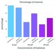 Comparison of the percentage of cadmium with different treatments carried out: alginate beads without Chlorella sp. (Without Chlorella), and alginate beads with Chlorella sp. ( Chlorella).. From: Analysis of removal of cadmium by action of immobilized Chlorella sp. micro-algae in alginate beads.  Christian Valdez, et al. F1000Res. 2018;7:54.