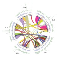 A physical map of Brassica oleracea shows complexity of chromosomal changes following recursive paleopolyploidizations.