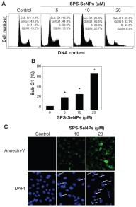 Surface decoration by Spirulina polysaccharide enhances the cellular uptake and anticancer efficacy of selenium nanoparticles