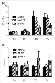 Ubiquinol Reduces Muscle Wasting but Not Fatigue in Tumor-Bearing Mice.  Effect of tumor growth and ubiquinol on expression of MAFbx, MuRF1, and BNIP3 mRNA in gastrocnemius muscle (a) and heart (b). Main effect of tumor in gastrocnemius, p < .01. CC = control no drug, n = 16; CU = control/ubiquinol, n = 16; TC = tumor no drug, n = 16; TU = tumor/ubiquinol, n = 16. Yvonne Y. Clark, et al. Biol Res Nurs. ;17(3):321-329