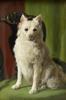 Hundporträtt 1923, Uppsala auktionskammare
