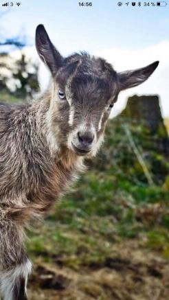 DjurVarDags Avbytartjänst tar hand om kor, getter, hästar, grisar, höns och smådjur.
