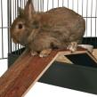Bro för kanin & marsvin