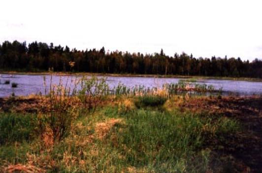 Efterbehandling till våtmark, ett år efter avslutad produktion, spontant etablerad vide och starrarter.