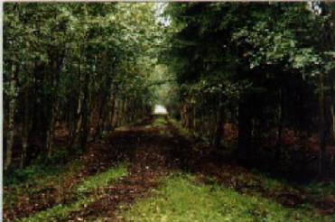Skogsodling på ca 1,5 m torv