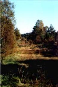Vegetation av högstarrtyp i äldre torvgrav, Hästhagsmossen, Småland.