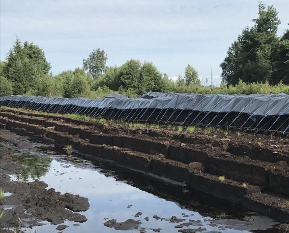 Torvblocken täcks med plast för att vattnet som finns kvar i den ska frysa under vintern. Då ökar torvens förmåga att ta upp vatten och luft.