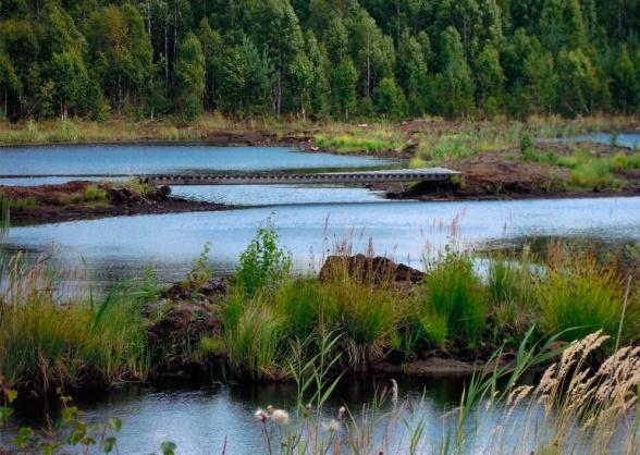 Detta är den efterbehandlade Nygårdsmossen. Vid efterbehandling av torvtäkter gynnar vi klimatet och den biologiska mångfalden och skapar nya viltvatten i våra landskap.