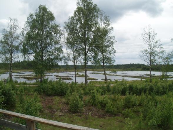 Torvtäkt efterbehandlad till våtmark (Porlamossen)