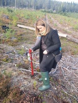 När Jennie Nilsson besökte Holmen Skog, som är medlem i Svensk Torv, planterade hon en tall strax utanför Gideå norr om Örnsköldsvik. Foto: Simon Andersson.