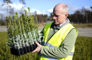 Johan Jonsson, Södra med Cambiguardplantor. Foto: Södra
