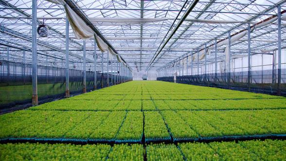 Mikroplantor i växthus som ska omskolas. Foto: Södra