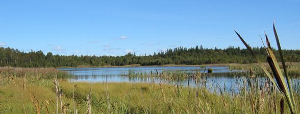Foto: Neova, Efterbehandlad torvtäkt, Toftmossen i Västmanland.