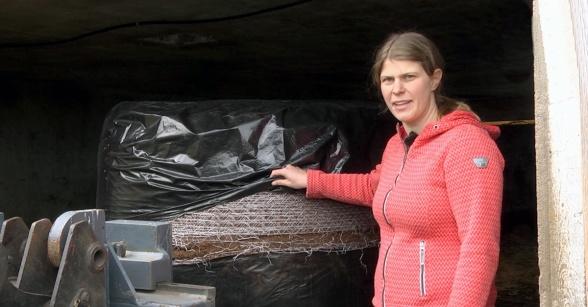 Rundbalarana är lätta att öppna genom att skära av så mycket man behöver uppifrån och lägga tillbaks överdelen av plasten som ett lock. Foto: Dag Eriksson.