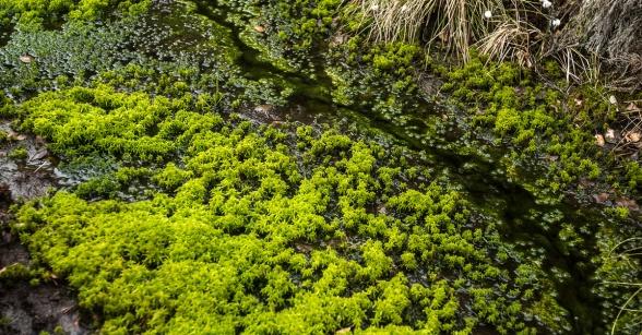 Närbild på ett dike på en av företagets torvtäkter som efter avslutad skörd har efterbehandlats till ny värdefull våtmark och kolsänka. Foto: Johan Funke