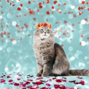 Katt med blommor