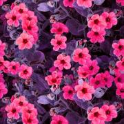 Rosa blommor, lila blad