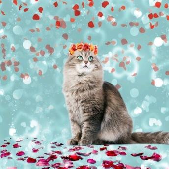 Katt med blommor -