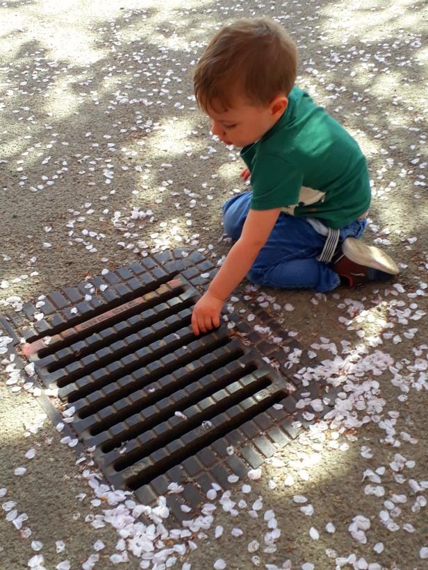 Julius var mest intresserad av att slänga blad ner i brunnen, så det blev ingen körbärsblomsbild med honom.