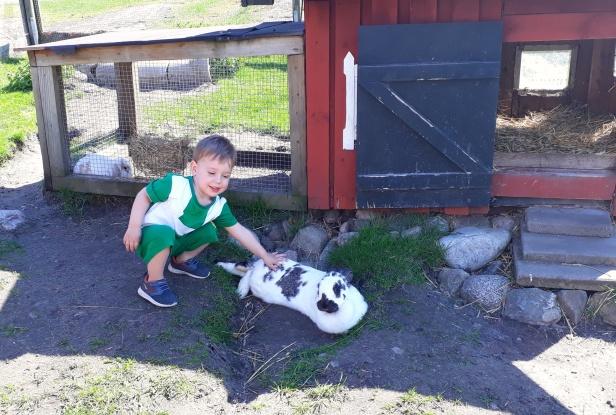 Julius klappar den stora snälla kaninen.