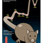 Råttsaneringar