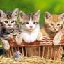 Pussel - Tre Söta Katter