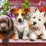 Pussel - Fem Söta Små Hundar