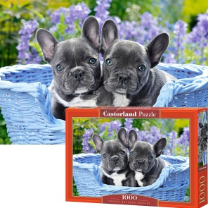 Pussel - French Bulldog Puppies -