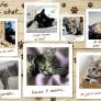 Pussel - Une vie de chat