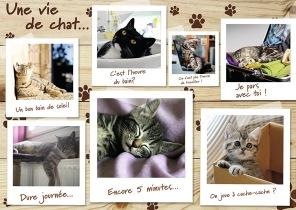 Pussel - Une vie de chat -