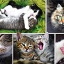 Pussel - Cats Collage