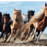 Pussel - Galopping Horses