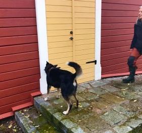Nose Work, hundträning med Hej Hund!