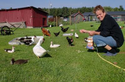 På Gangvidefarm finns fåglar av många sorter