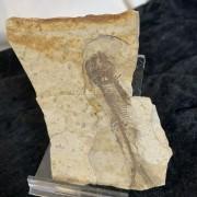Fossiliserade fiskar