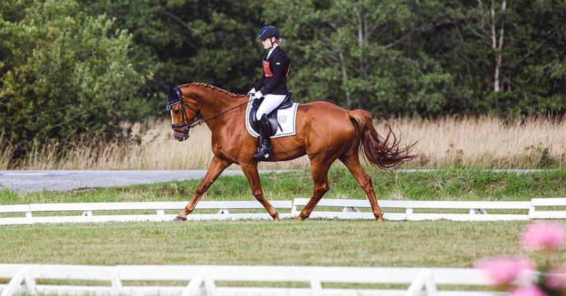 Kvinna rider häst under dressyr