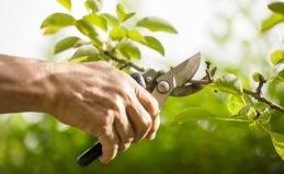 Vill du ha hjälp med beskärning av träd i Uppsala? Kontakta City Trädvård AB för professionell hjälp med trädbeskärning & trädservice