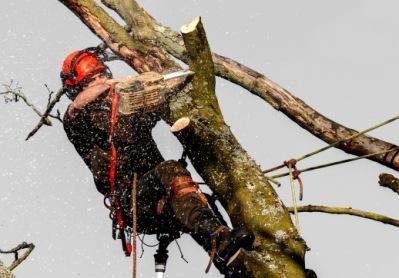 Trädfällning och sektionsfällning av certifierad Arborist i Uppsala. Kontakta oss på City Trädvård & Trädfällning i Uppsala för professionell hjälp med all typ av trädvård & trädservice