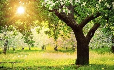 Anlita City Trädvård för hjälp med trädbeskärning i Uppsala