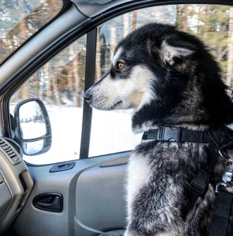 Jag och den där Sitka på väg till Mullnäset.