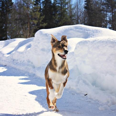 Fox, Foto: Frida Tenghede