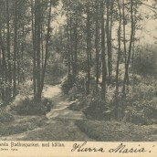 Boulognerskogen (01)