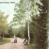 Boulognerskogen (03)