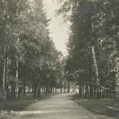 Boulognerskogen (06)