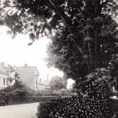 Trädgårdsgatan (6)